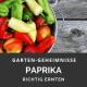 wann ist eine Paprika reif