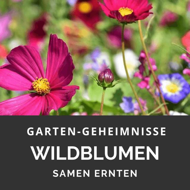 Wildblumen selbst vermehren
