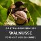 schimmel_walnüsse