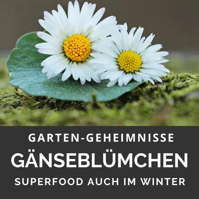 Gänseblümchen Superfood