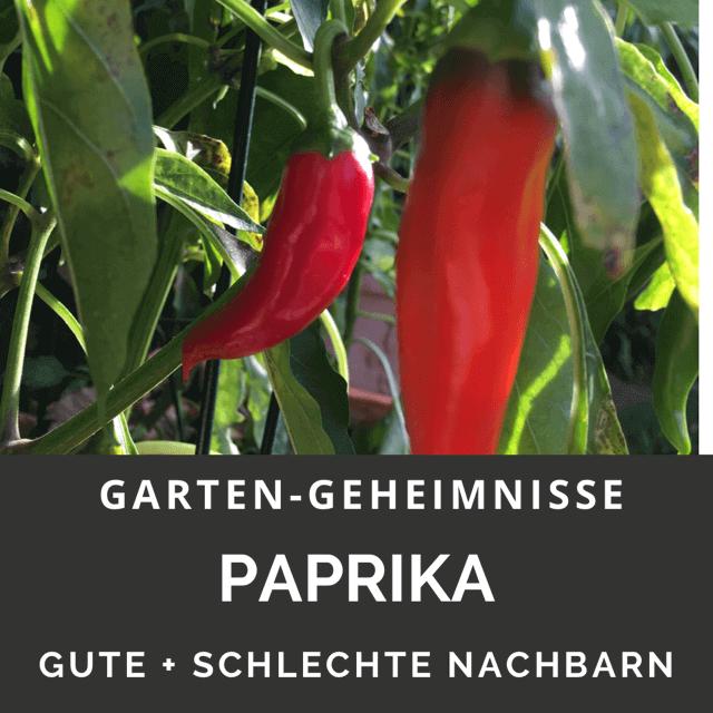 Paprika gute Nachbarn